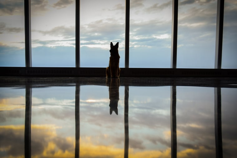 Image: Rumor, winner of the Westminster Kennel Club Dog Show, poses for a photo at One World Observatory