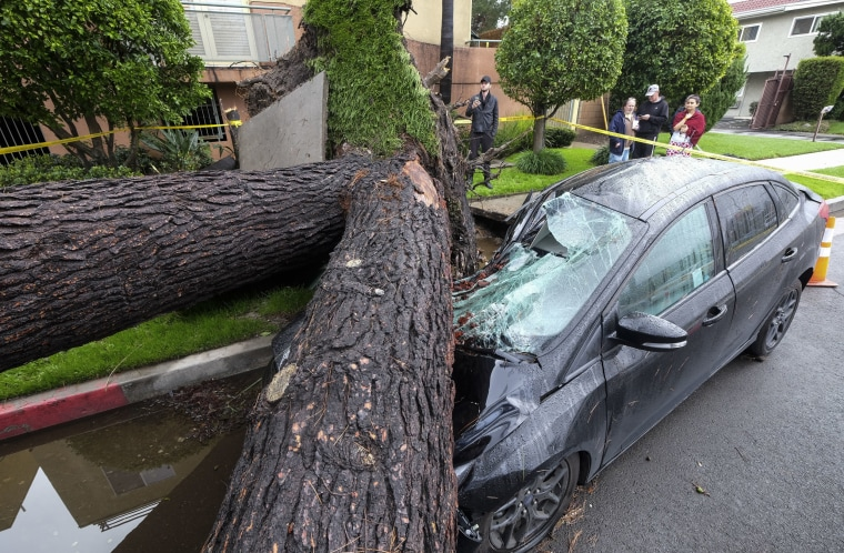 Image: A fallen tree crushes a car outside a residence n Sherman Oaks