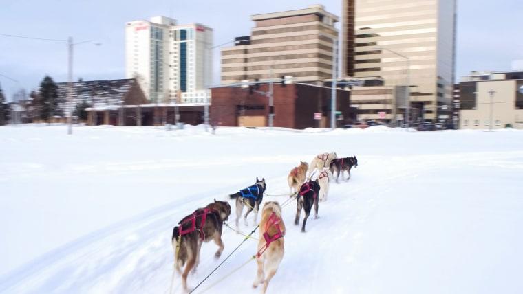 Anchorage Alaska Dog Sled Race