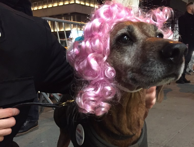 """Protester Liz Dalton's dog at the """"Queer and Trans Dance Party/Protest"""" outside Trump Tower in New York City on Feb. 26, 2017"""