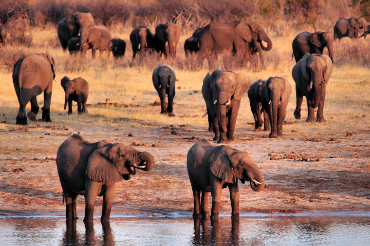 Image: Elephants at a watering hole in Hwange National Park, Zimbabwe.