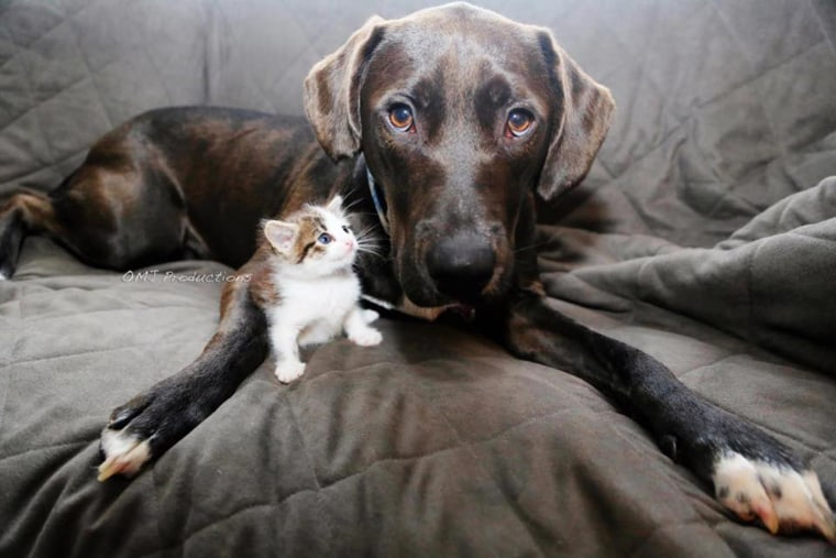 HarleyQuinn the dog and Memphis the kitten were both adopted from Brooklyn's city shelter.