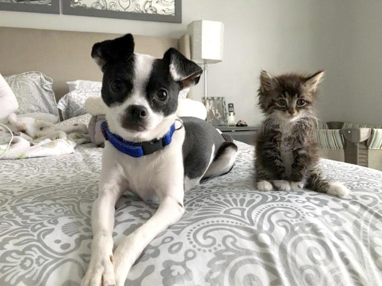 Skeeter the dog loves his kitten Roo.