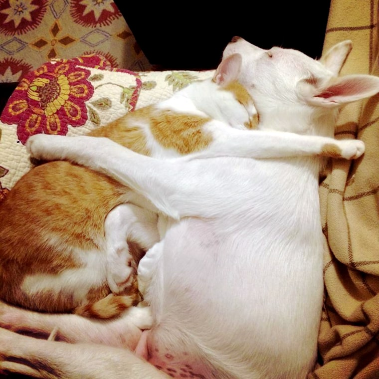 Pumpkin the cat and Winnie the dog were adopted from different shelters, but now they are family.