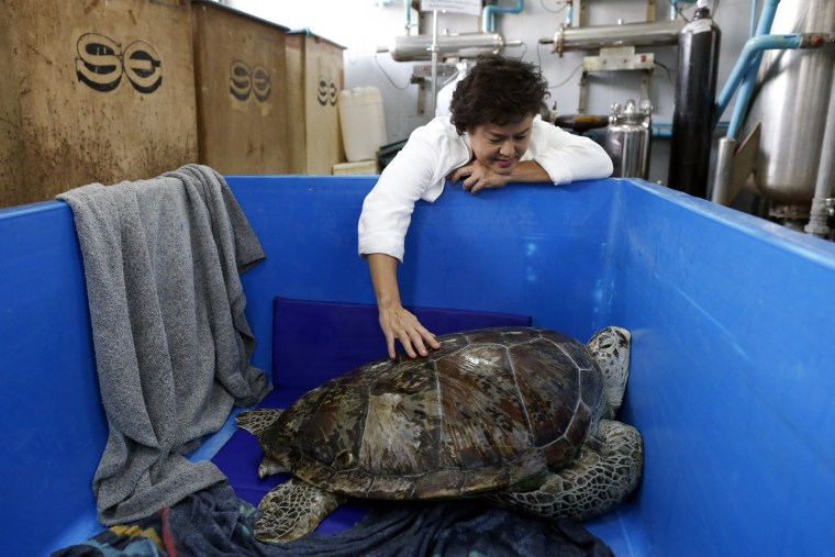 Image: Thai veterinarians remove 915 coins from a green sea turtle's stomach