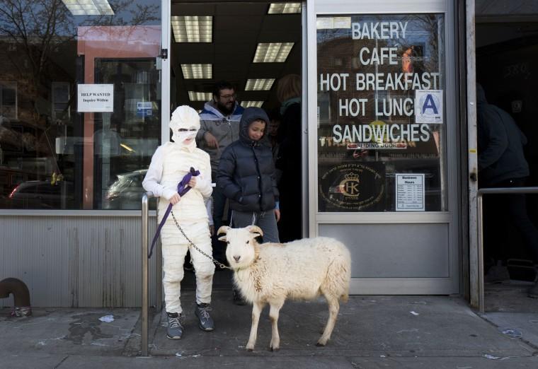 Image: A boy in costume as a mummy for the Jewish celebration of Purim leads his pet goat out of a Brooklyn bakery in New York.