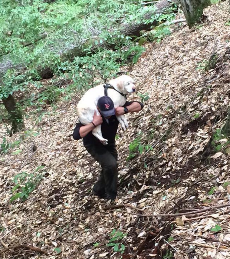 Firefighter rescues blind dog lost in woods for 8 days, then turns down reward