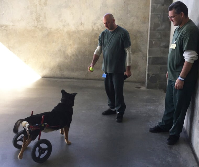 Bandit gets ready to play with his primary and secondary caregivers.