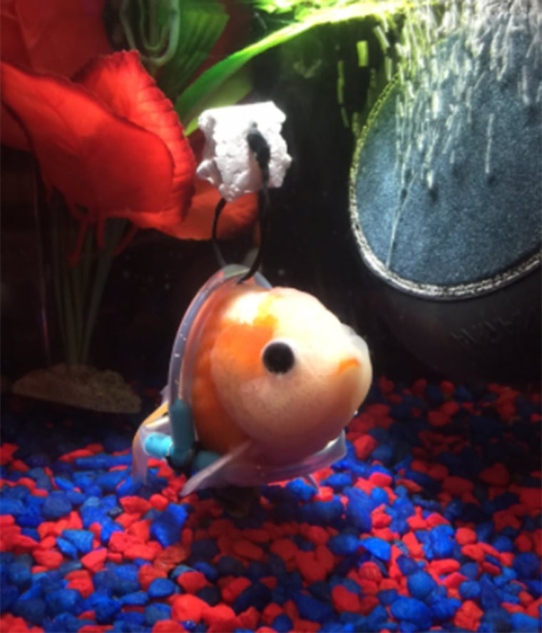 Now the goldfish's owner is looking for help naming his pet.