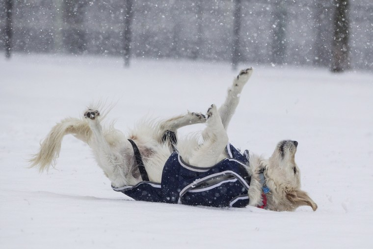 Image: A dog rolls in the snow on the Boston Common