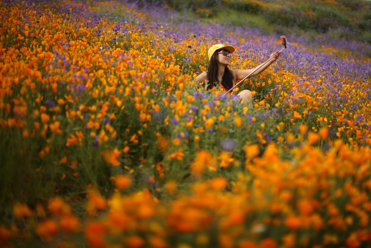 Image: A woman uses a selfie stick to photograph herself in a massive spring wildflower bloom caused by a wet winter in Lake Elsinore
