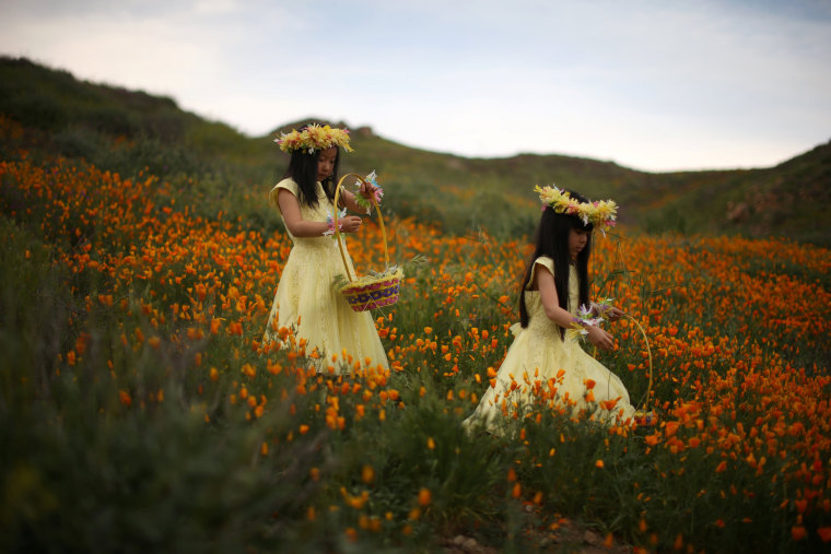 Image: Julia Lu, 5, and Amy Liu, 5, walk through a massive spring wildflower bloom caused by a wet winter in Lake Elsinore
