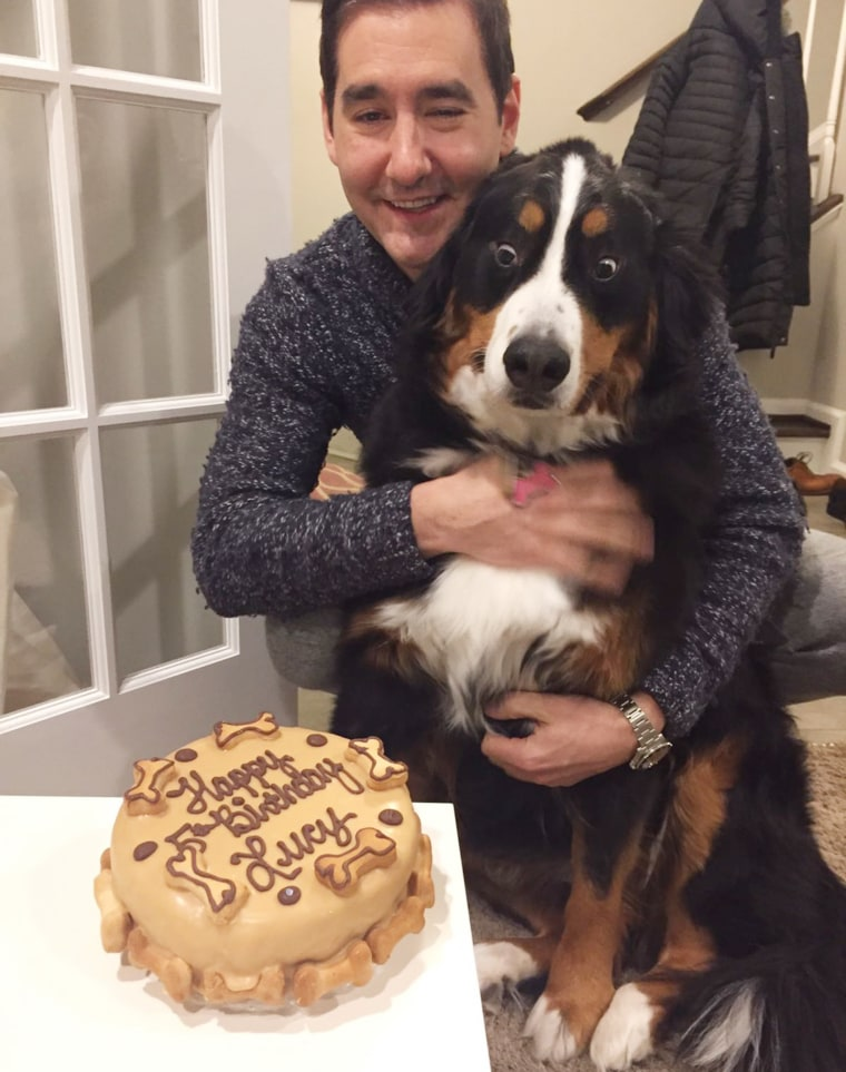 Tremendous Dog Is Absolutely Thrilled About Her Birthday Cake Funny Birthday Cards Online Sheoxdamsfinfo