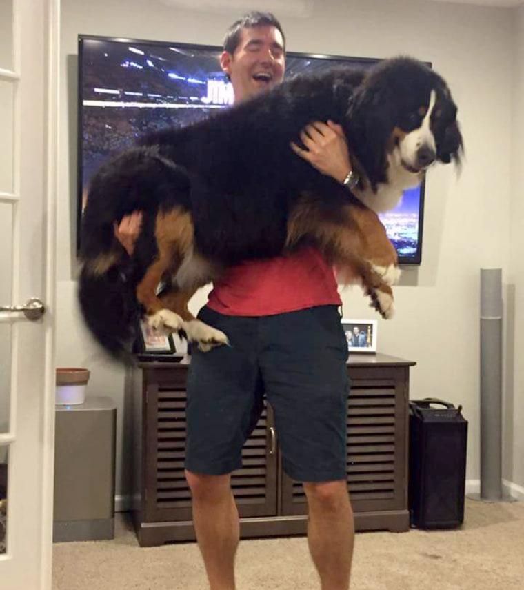 Christopher Vrankovic picks up Lucy the dog