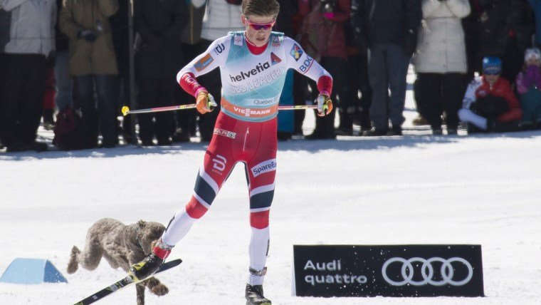 IJohannes Hoesflot Klaebo is chased by a stray dog