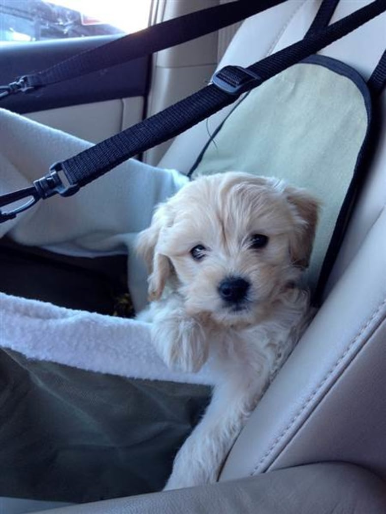 """Jenny Sargent Parham straps her tiny pooch in for a drive. """"They really are like your children,"""" she wrote on TODAY's Facebook page."""