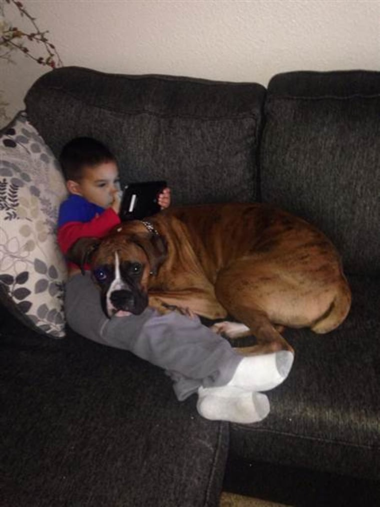 """""""They WILL get on the couch when you're not looking,"""" wrote Amanda Leigh Delgado."""