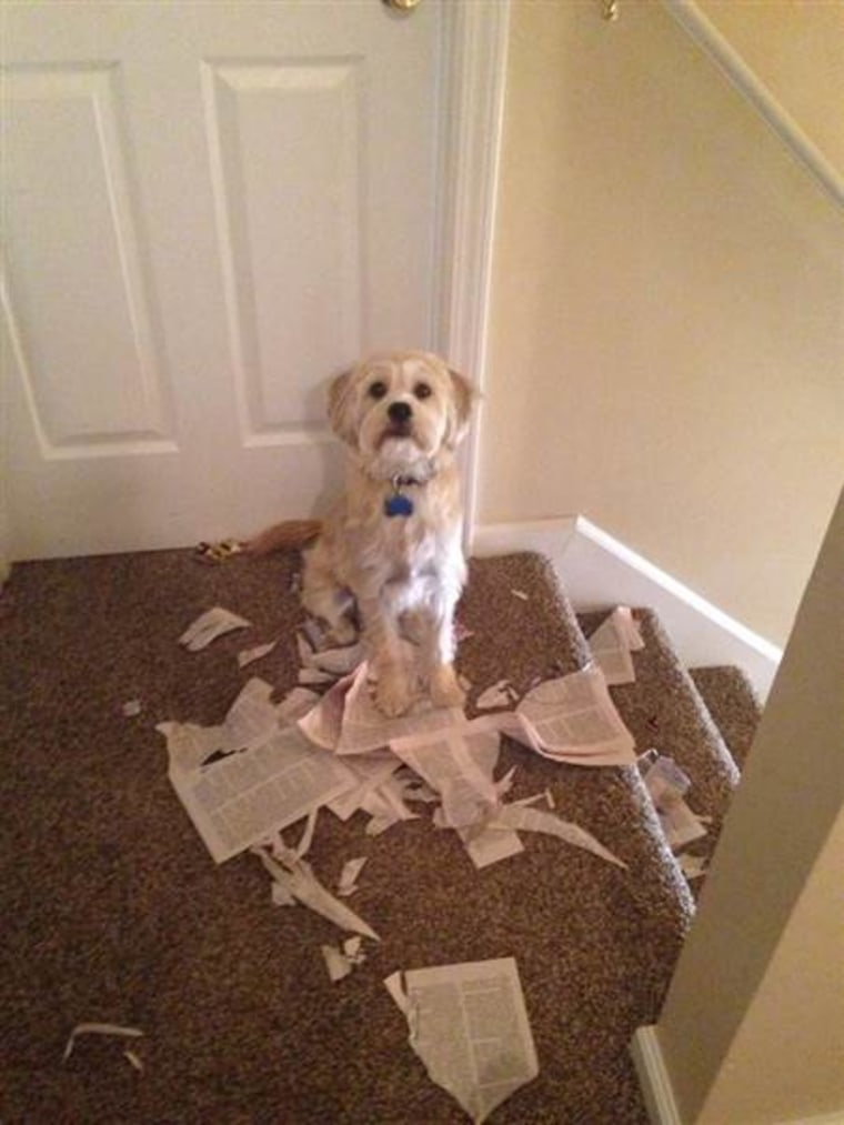 """""""The puppy stage takes forever,"""" wrote Petra Kathlina, whose dog appears to have done some damage to her book."""