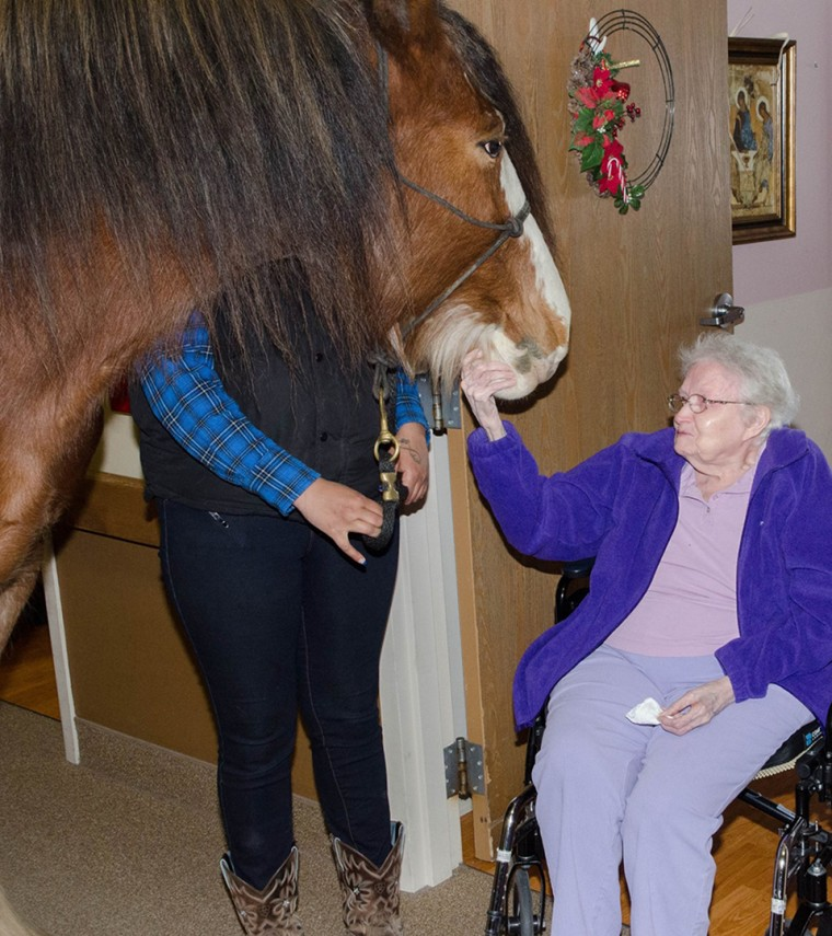 Clydesdale that visited the Village of East Harbor Senior Living Community for pet therapy.