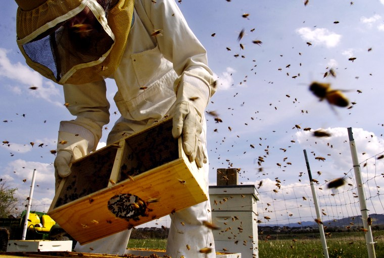 LITTLETON, COLO., MAY 03, 2005 -- Tanner Thompson, 17<cq>, an employee of Denver Botanic Gardens, Tuesday, May 03, 2005, install 30,000 honeybees into beehives, at the Denver Botanic Gardens at Chatfield, to replace the ones they lost to the varroa mite.