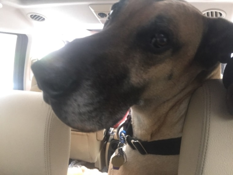 Mike Great Dane rescued from river