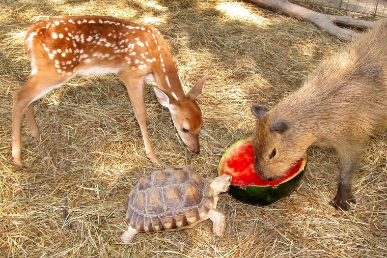 All kinds of animals form friendships at the sanctuary.
