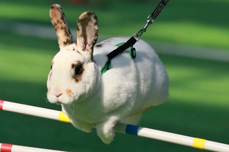 Image: CZECH-LIFESTYLE-ANIMALS-RABBITS