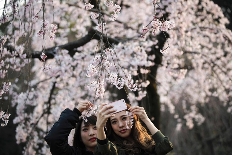 Image: Women take selfies with cherry blossoms in a park in Tokyo on March 30, 2017.