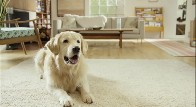 Image: Your pets can now interact with your Amazon Echo thanks to a new Petlexa feature.