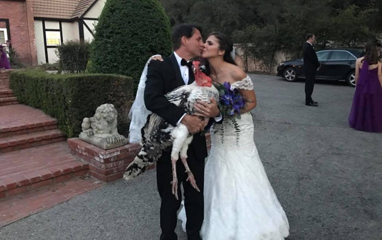 Turkey rescued from meat farm becomes wedding guest of honor
