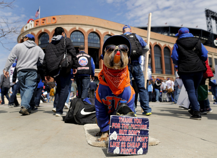Image: A dog sits outside CitiField dressed in New York Mets garb