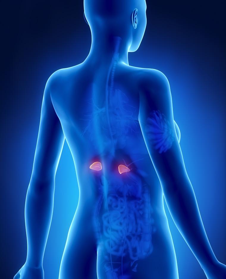 Adrenal Gland: What Is Adrenal Fatigue? Some Doctors Doubt Vague Symptoms