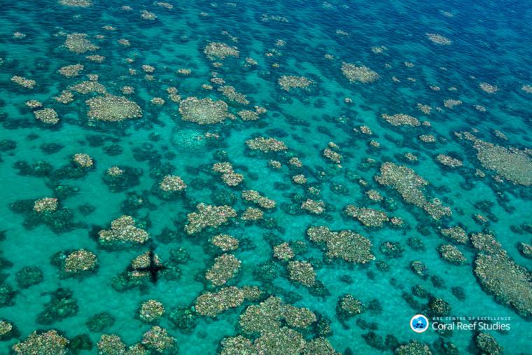 Image: Cairns Townsville bleaching, Australia, March 2017
