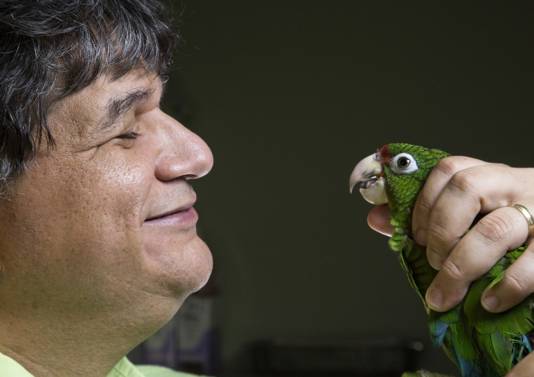 Jafet Velez-Valentin inspects the health of a rare Puerto Rican Parrot