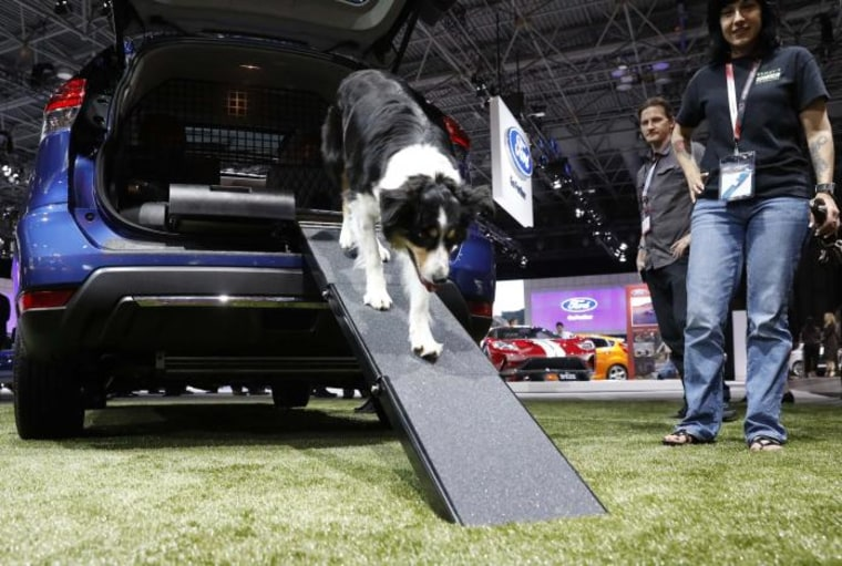 Dog walks down ramp of the Nissan Rogue Dogue edition at the 2017 New York International Auto Show in New York