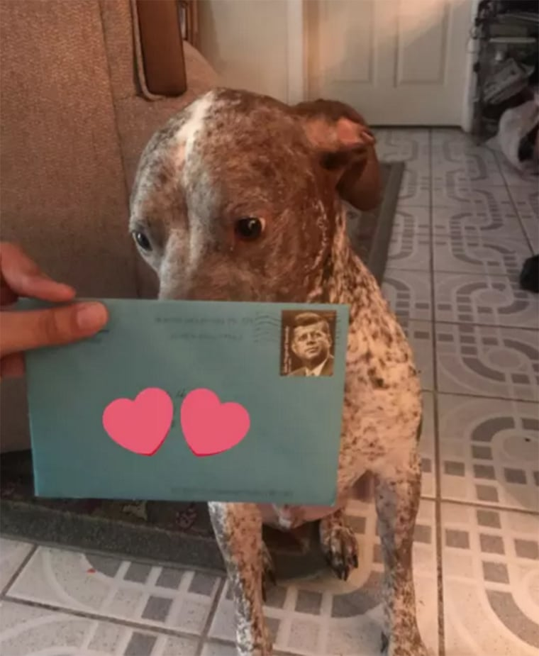 Woman's ex sends their dog birthday cards