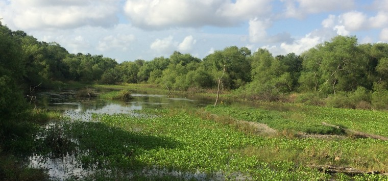 The view of the wetland wildlife habitat and water fowl through the Resaca blind in the Sabal Palm Sanctuary in Brownsville, Texas.