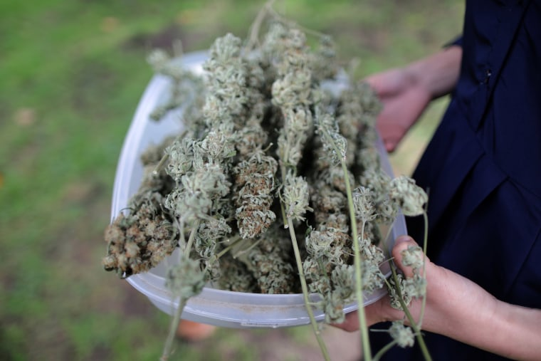 """Image: California """"weed nun"""" India Delgado, who goes by the name Sister Eevee, carries hemp at Sisters of the Valley near Merced"""