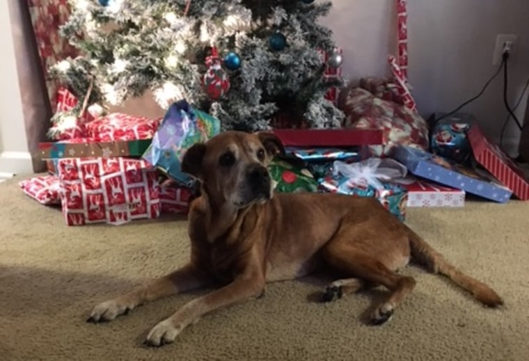 The Clarks adopted Rocky from an animal shelter in December 2015, when he was 17 years old.