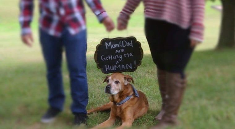 The Clarks announced their pregnancy with a bit of help from Rocky.