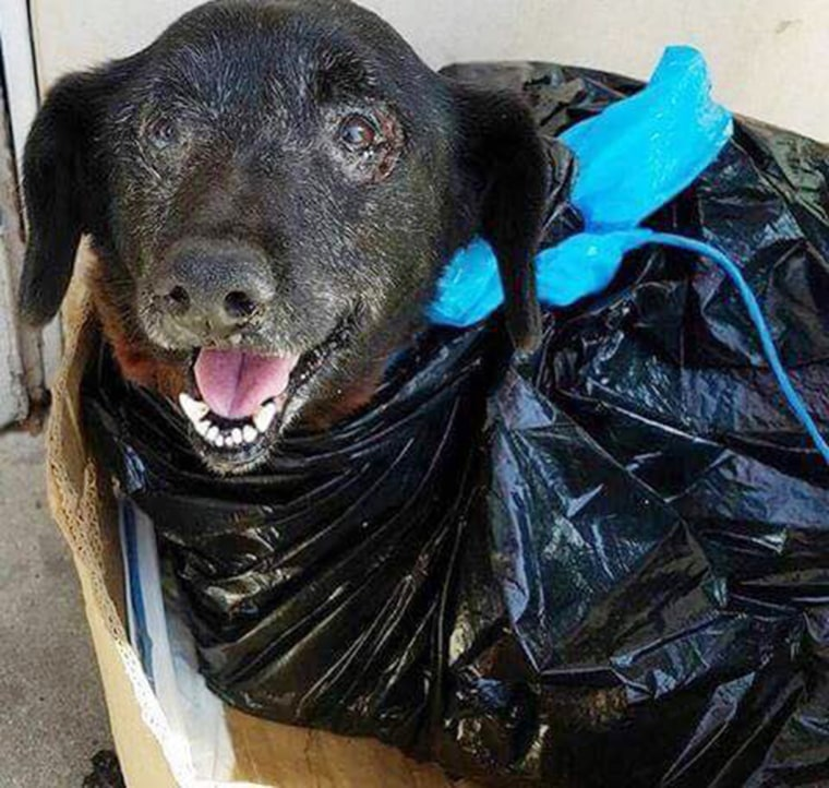 Blackie was dropped off at a busy California shelter wrapped in a garbage bag.