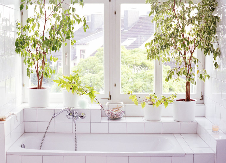 plants that thrive in bathrooms and showers - Bathroom Plants