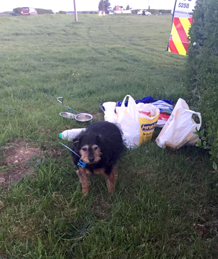 Elderly dog is left in field with sad note