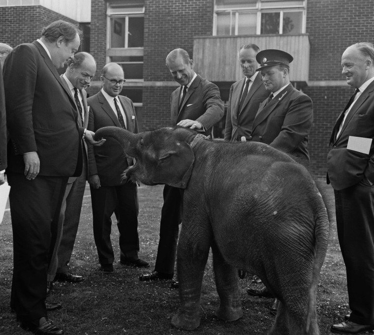 Image: Duke Meets Elephant