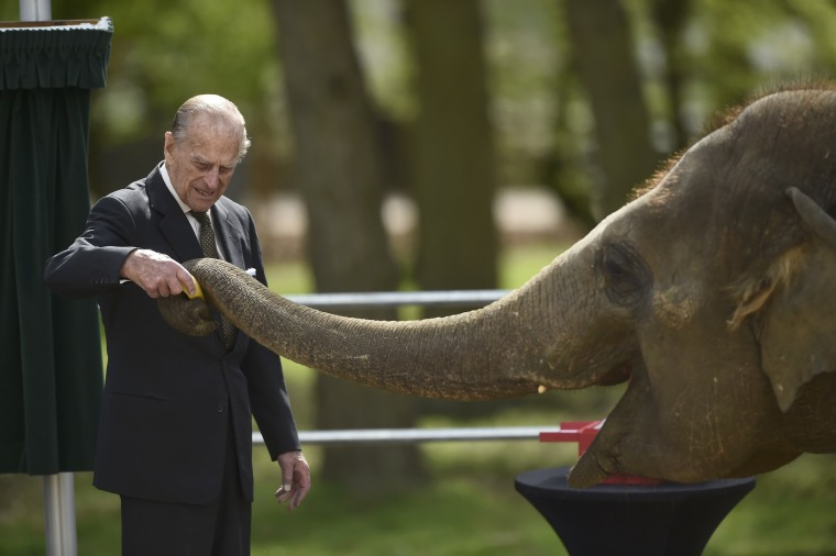 Image: Britain's Prince Philip feeds an elephant during a visit to Whipsnade Zoo where Queen Elizabeth opened the new Centre for Elephant Care, in Dunstable
