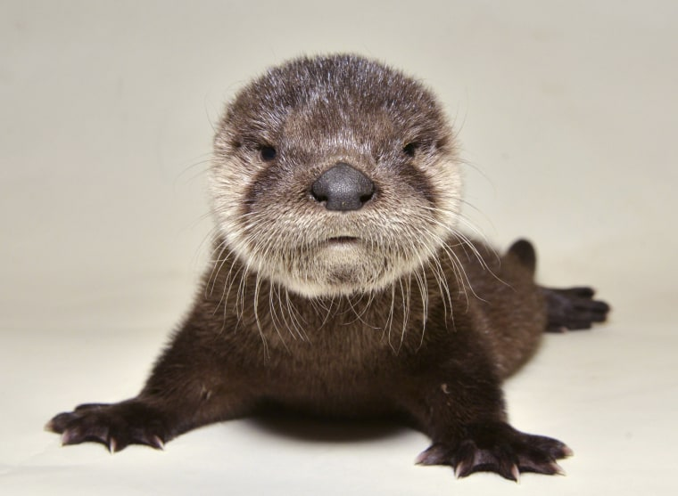 Image: A rescued otter at the Adobe Mountain Wildlife Center in Phoenix