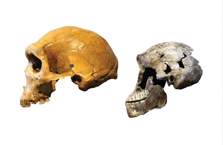 "Image: Kabwe skull from Zambia and a ""Neo"" skull of Homo naledi"