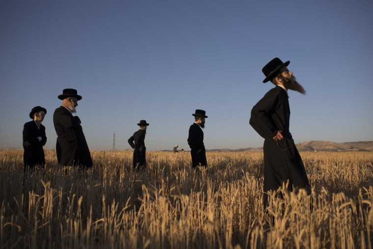 Image: Ultra Orthodox Jews harvest wheat