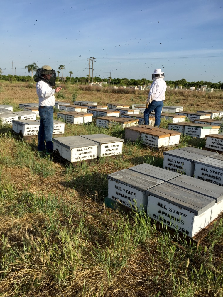 Image: Beeline Honey's Stolen Hives After They Were Recovered in Fresno County, California