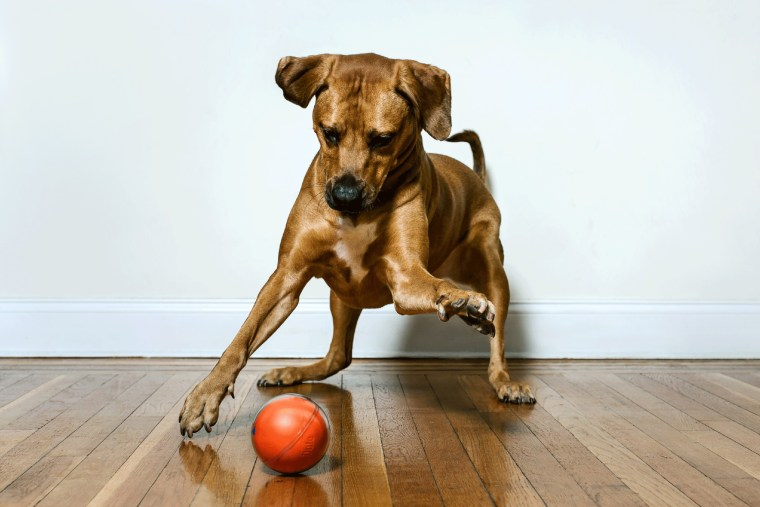 PlayDate's smart ball lets you interact with your pets when you're not home.